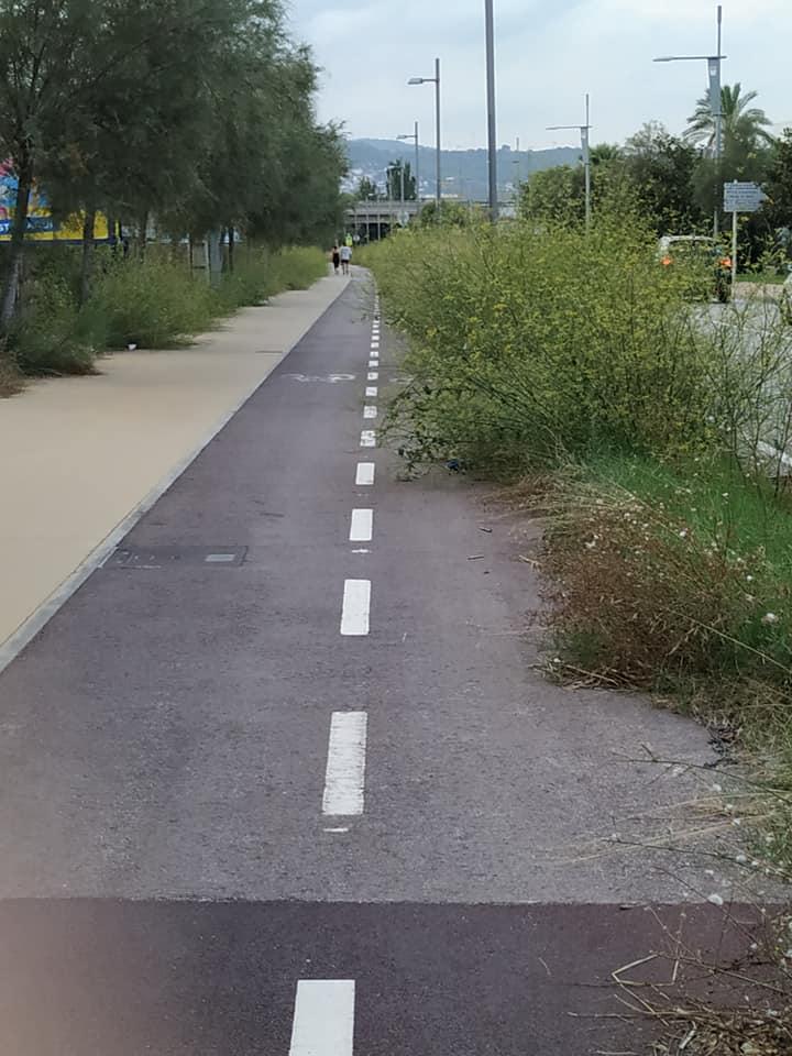 Carril bici de la Av. del Mar invadida por hierbas. Foto: Mercedes López.