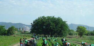 Parc Agrari del Baix Llobregat. Foto: Xavi Cabo.