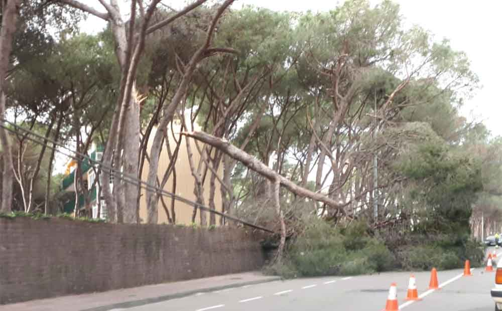 Árbol caído en la Avenida Europa. Foto: El Bruguers Digital.