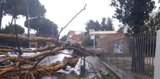 Caída del árbol en Amercian Lake.