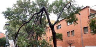 Árbol caído en la Riera de les Parets en temporales pasados.