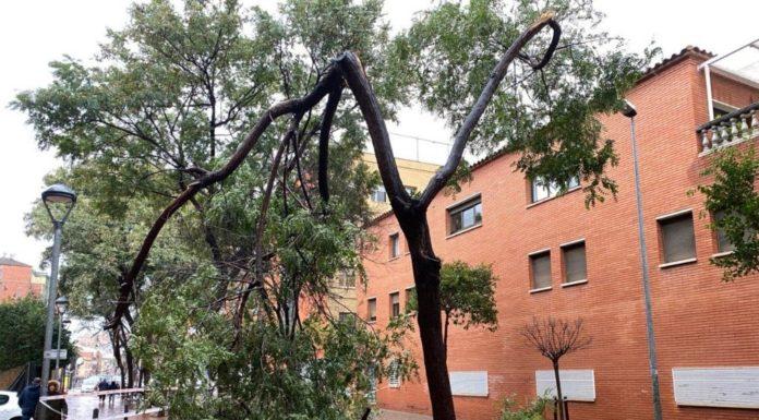 Árbol caído en la Riera de les Parets.