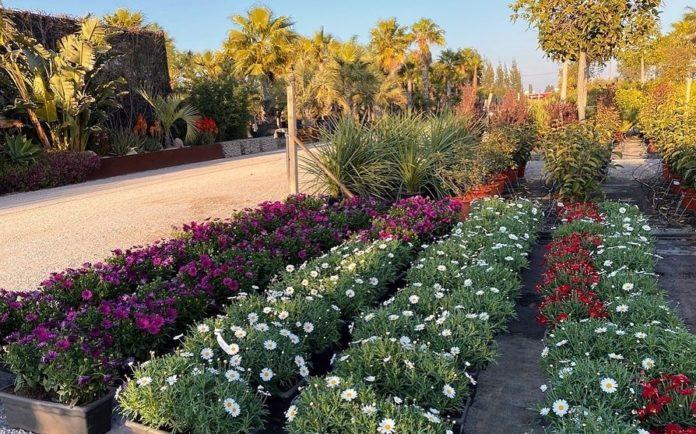 Algunas de las plantas que están puestas a la venta