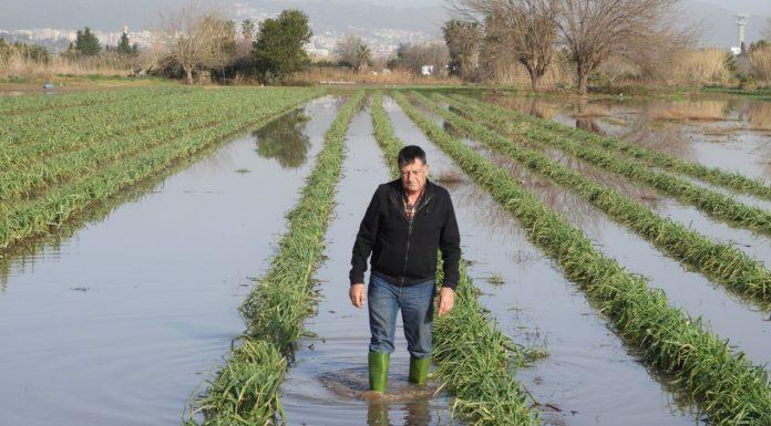 osep Pañella, en uno de sus campos de calçots anegados, pocos días después del paso de Gloria.
