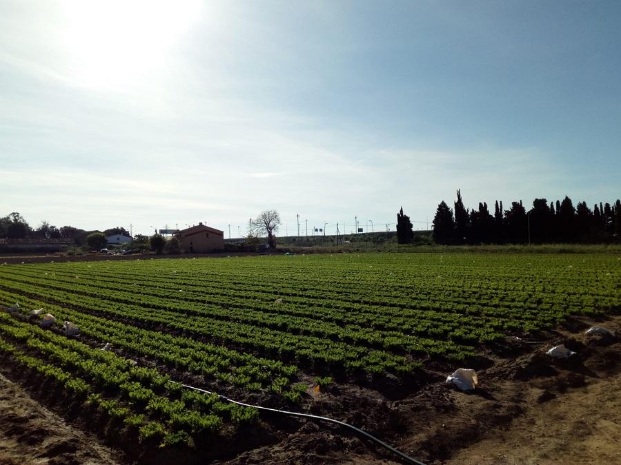 Parc Agrari del Baix Llobregat. Foto: Ayuntamiento de Gavà.