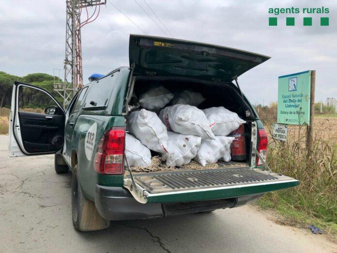 Agentes Rurales con los sacos de piñas en el Camí Pineda (Gavà Mar).