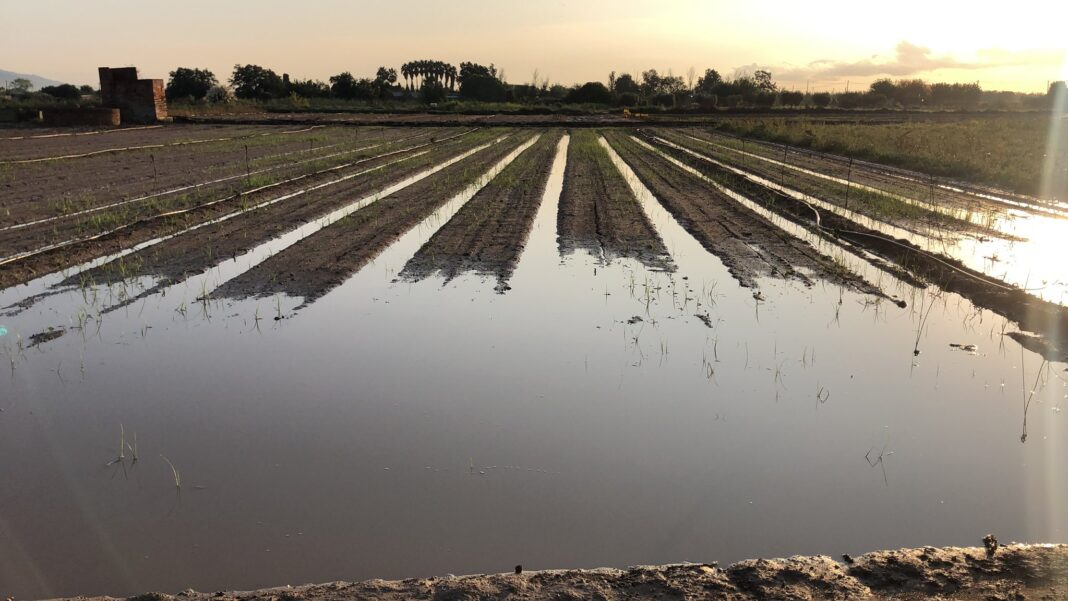 Cultivos de Gavà inundados. Foto: Twitter Josep Pañella (@josep_panyella).
