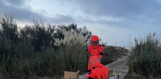 Operarios en la retirada del nido de avispa asiática. Fotos: GAVÀ INFO.